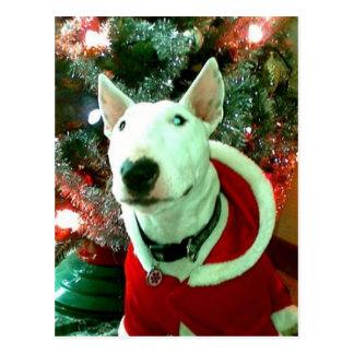 bull terrier christmas postcard