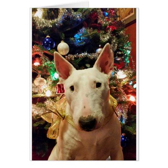 bull terrier Christmas present tree Card