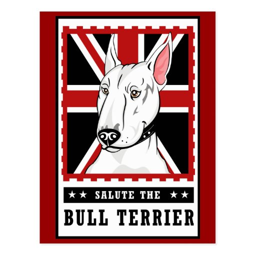 Bull Terrier Postcard Collection