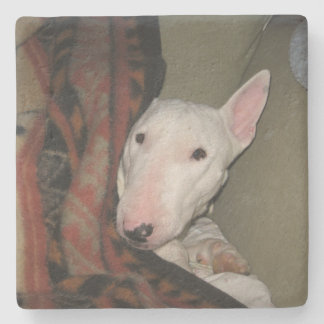Bull Terrier Snuggled Under a Blanket (Color) Stone Coaster