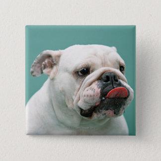 Bulldog 15 Cm Square Badge