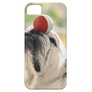 Bulldog balancing ball on snout, close-up iPhone 5 case