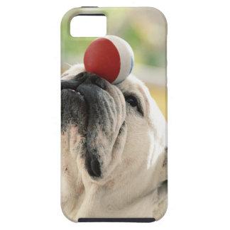 Bulldog balancing ball on snout, close-up iPhone 5 cover