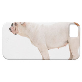 Bulldog Barely There iPhone 5 Case