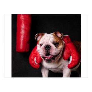 Bulldog Boxer Postcards