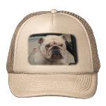 Bulldog Dog Trucker Hat