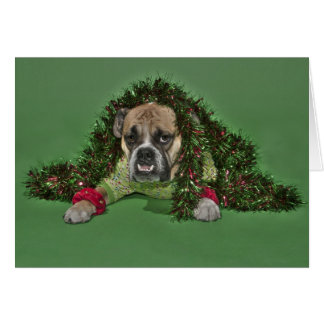Bulldog dressed up for Christmas Card