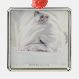 Bulldog Eating Christmas Ornament