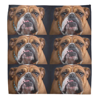 Bulldog English Bad Face Bandana