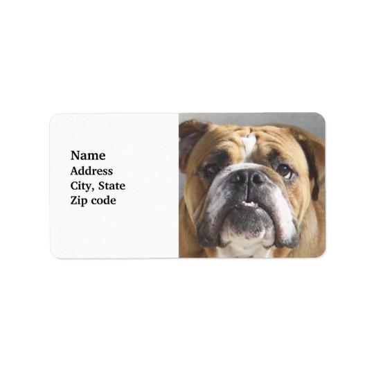 Bulldog Face - English Bulldog, Brown Label