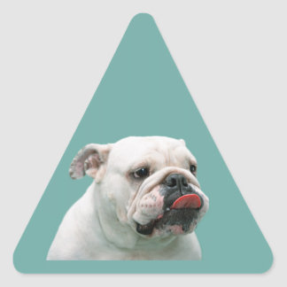 Bulldog funny face with tongue sticking out, gift triangle sticker