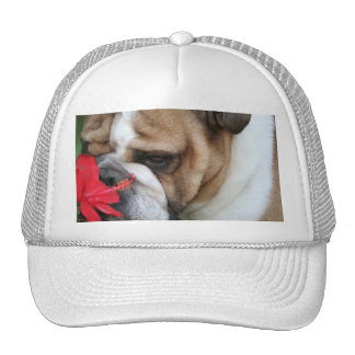 "Bulldog Hat ""take time to smell the flowers"""