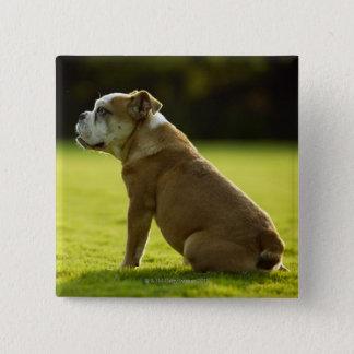 Bulldog in field 15 cm square badge