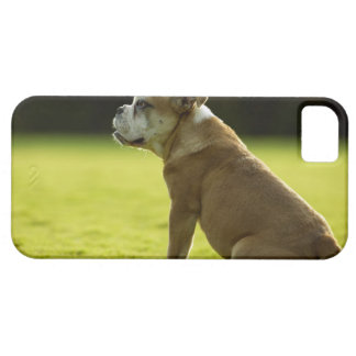 Bulldog in field case for the iPhone 5