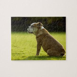 Bulldog in field jigsaw puzzle