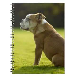 Bulldog in field notebooks