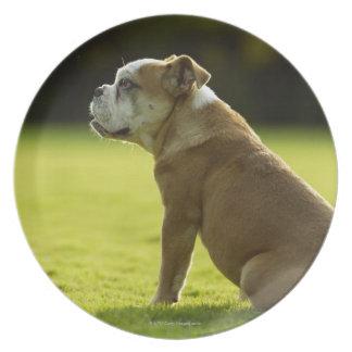 Bulldog in field plate