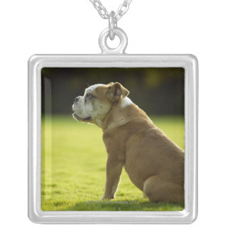 Bulldog in field silver plated necklace