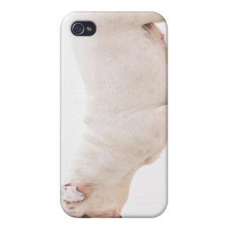 Bulldog iPhone 4 Cases