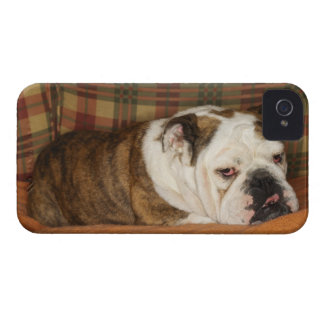 bulldog lying on a sofa iPhone 4 case