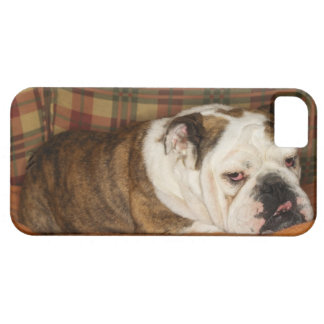bulldog lying on a sofa iPhone 5 case