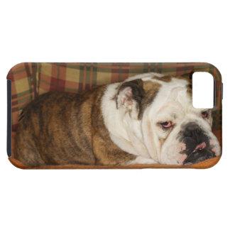 bulldog lying on a sofa iPhone 5 cover