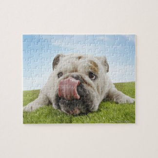 Bulldog Lying on Grass Licking Lips Puzzle