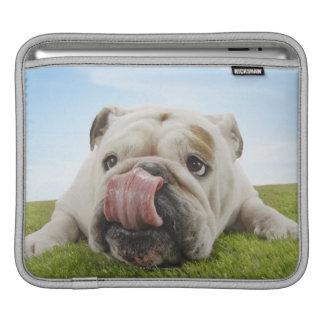 Bulldog Lying on Grass Licking Lips Sleeves For iPads