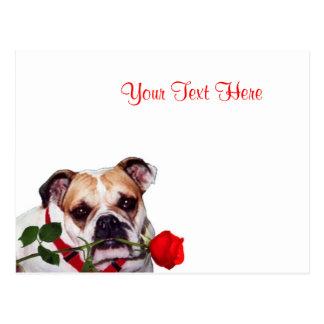 Bulldog Maddie Red Rose Valentine Design Postcard
