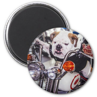 Bulldog on Motorcycle 6 Cm Round Magnet