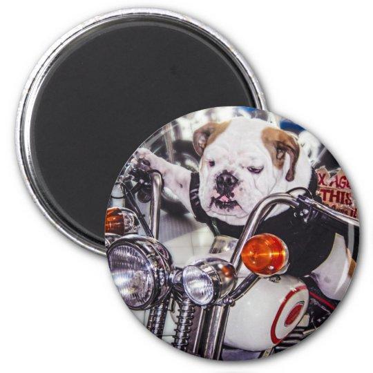 Bulldog on Motorcycle 6 Cm Round Magnet