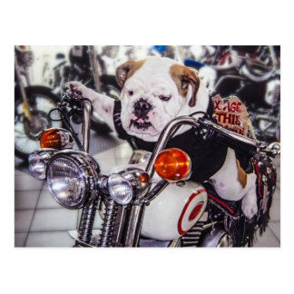 Bulldog on Motorcycle Postcard