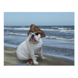Bulldog Pirate on the beach Postcard
