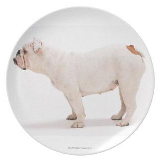 Bulldog Plate