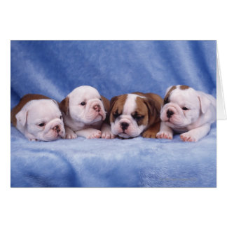 Bulldog puppies card
