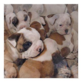 Bulldog Puppies Invitations
