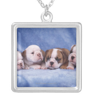 Bulldog puppies silver plated necklace