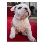 Bulldog Puppy Post Cards