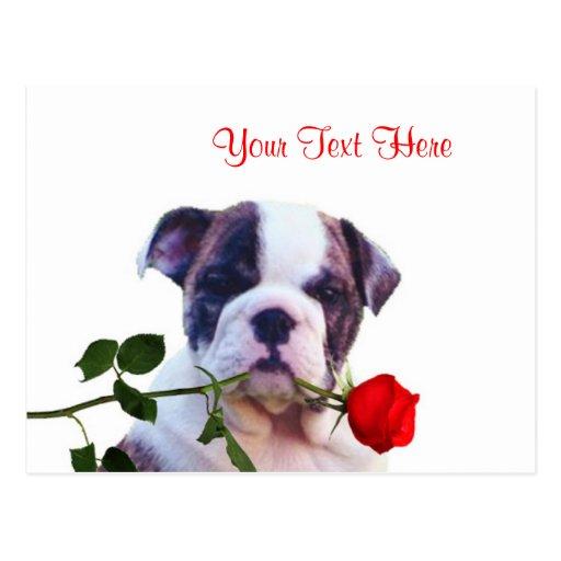 Bulldog Puppy Red Rose Valentine Design Postcards