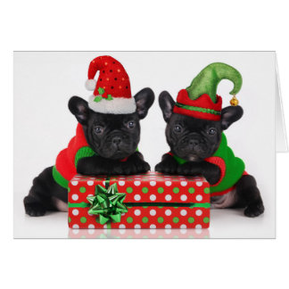 bulldog puppy with Christmas gift Card