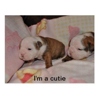 bulldog pups postcard