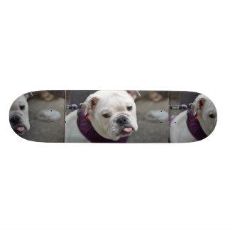 Bulldog Taunt Skateboards