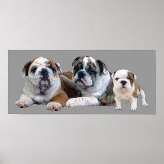 Bulldog Trio Print