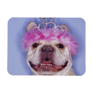 Bulldog wearing tiara magnet