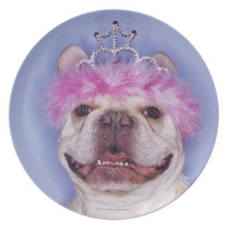 Bulldog wearing tiara plate