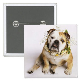 Bulldog with flower collar 15 cm square badge