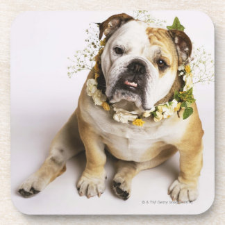 Bulldog with flower collar coaster