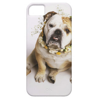 Bulldog with flower collar iPhone 5 cover