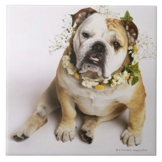Bulldog with flower collar large square tile