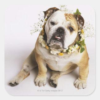 Bulldog with flower collar square sticker